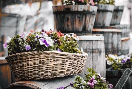 Grădină rustică