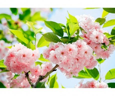 Sakura Blossom Tapéta 254x366 cm