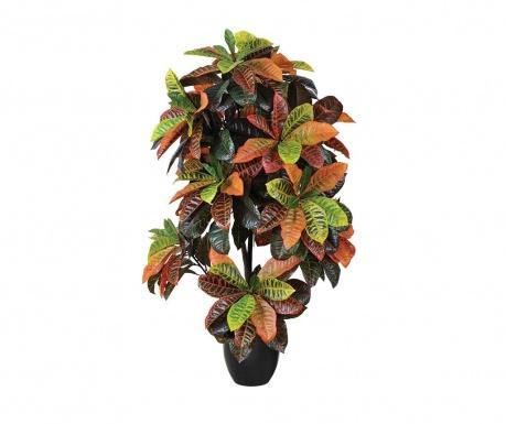 Croton Műnövény virágcserépben