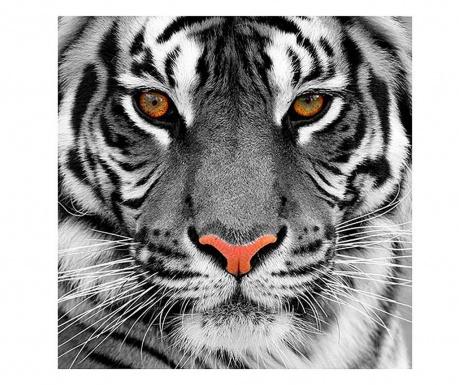 Tiger Kép 80x80 cm