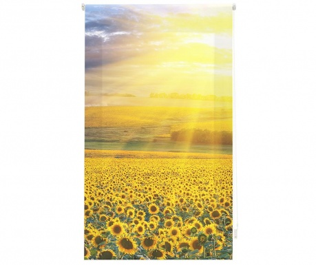 Fotoroleta Sunflower Field