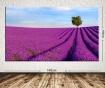 Obraz Lavender Field 100x140 cm