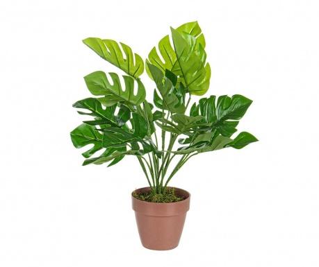 Umělá rostlina v květináči Monstera Baby