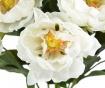 Peonia Művirág
