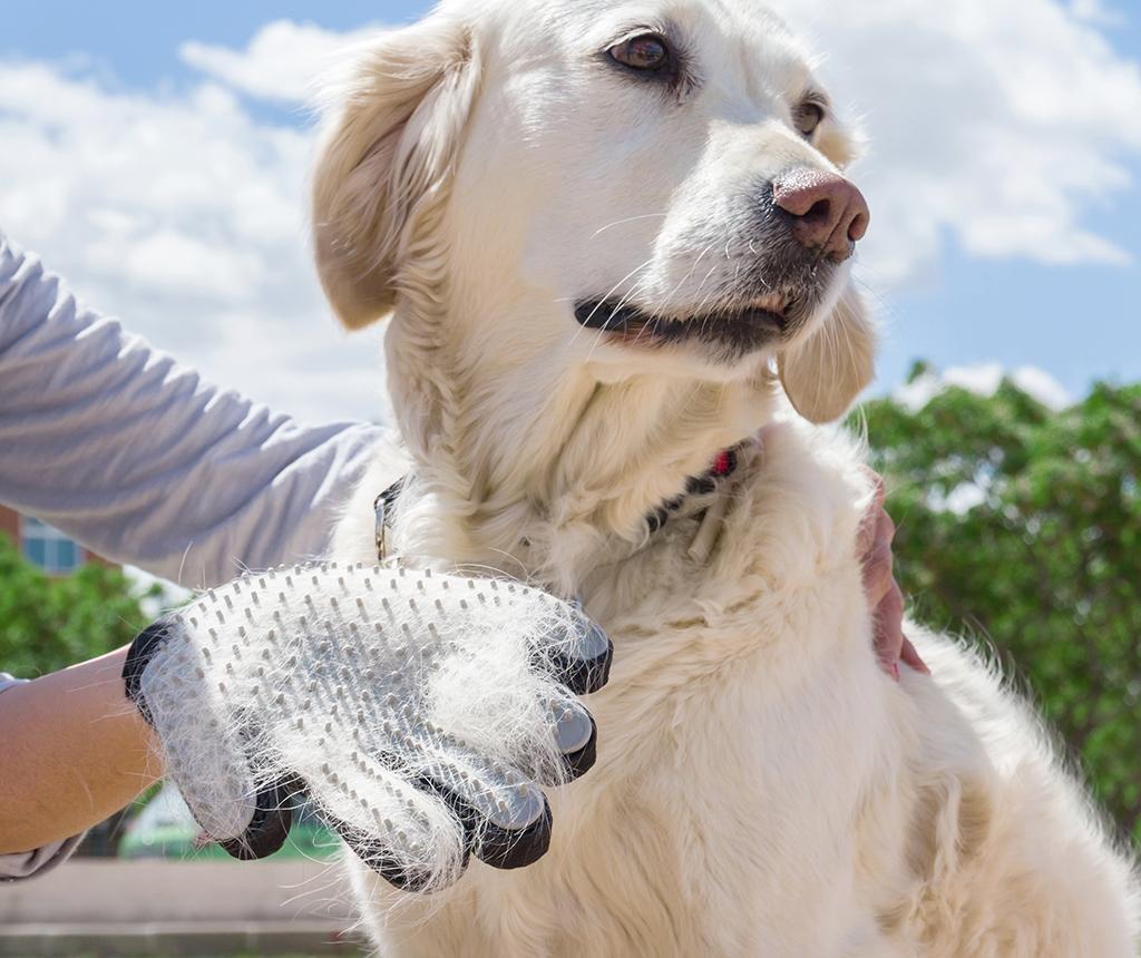 Manusa-perie pentru animale InnovaGoods Pets