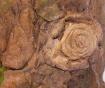 Květináč Pajaros
