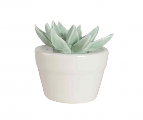 Dekoracija Succulent
