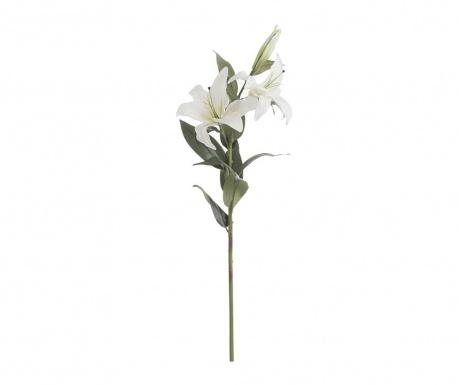 Iris Művirág
