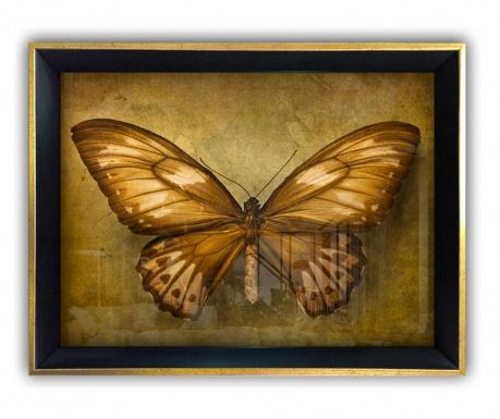 Obraz Butterfly