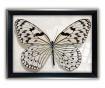 Tablou Big Butterfly 45x65 cm